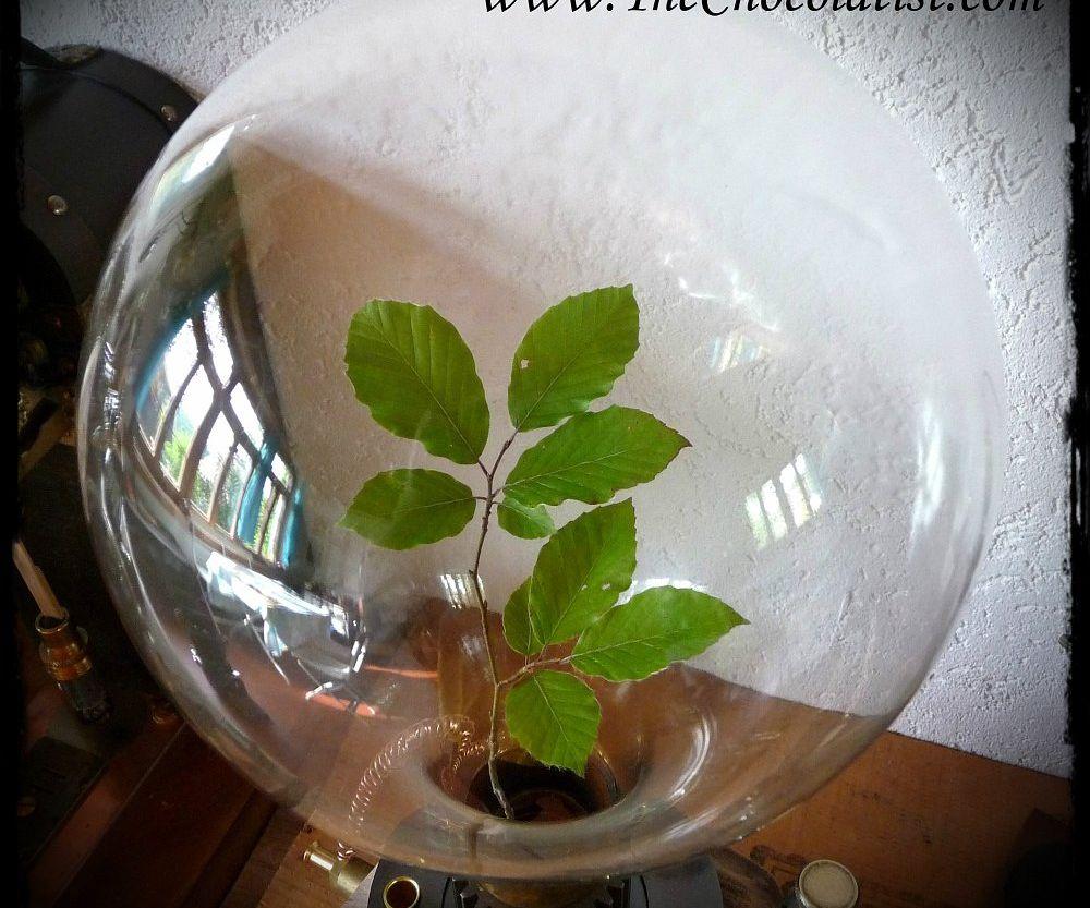 The STEAMPUNK Biosphere Model 1876