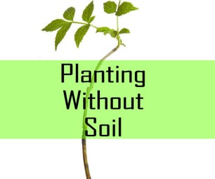 Planting Without Soil