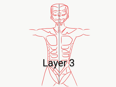 Making of Layer 3(Muscular System)
