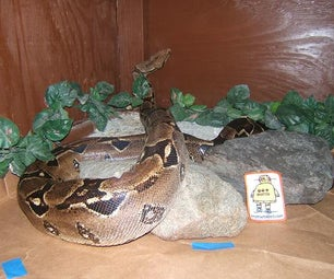 Safety & Energy-efficiency in Large Reptile Enclosures