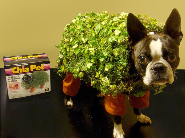 Echo the Chia Pet Dog Costume