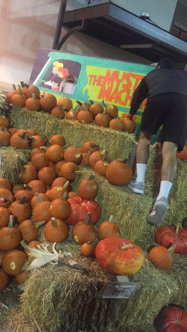 Pick Out a Pumpkin!