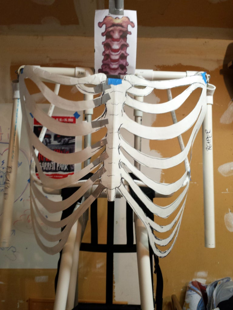 Frame and Rib Cage