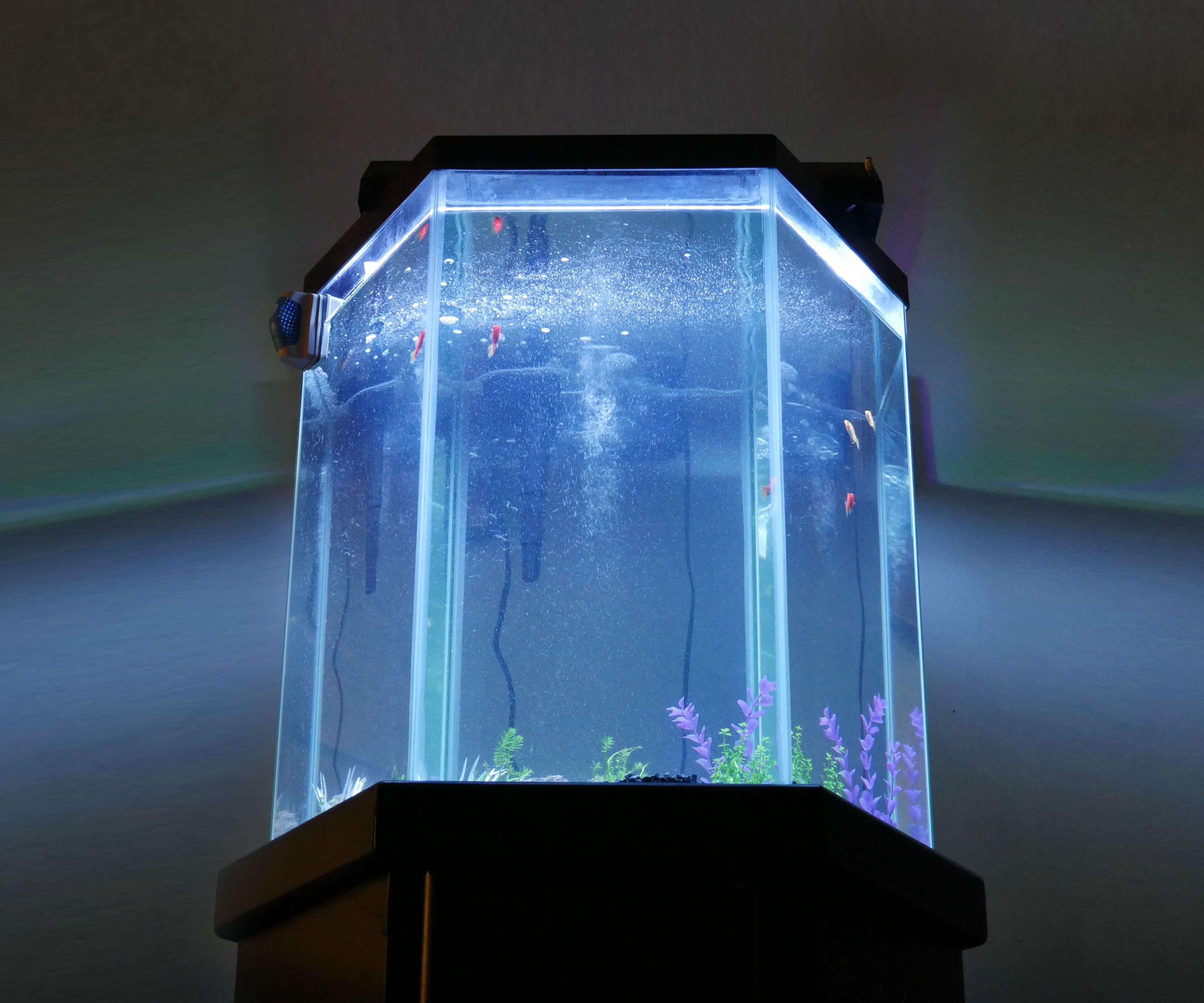 LED Aquarium Lights for Under $10