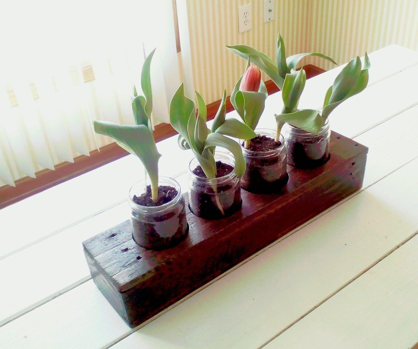 Indoor Flower Box Garden