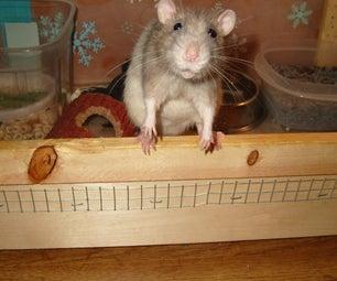 How To: Pet Rats
