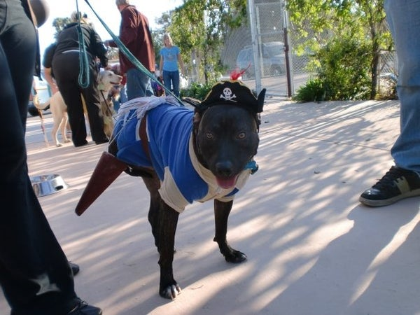 Doggy Pirate Costume With Peg Leg