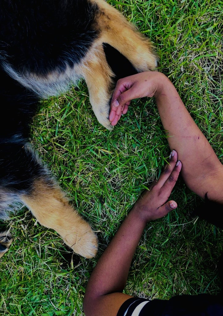 Love for Dogs