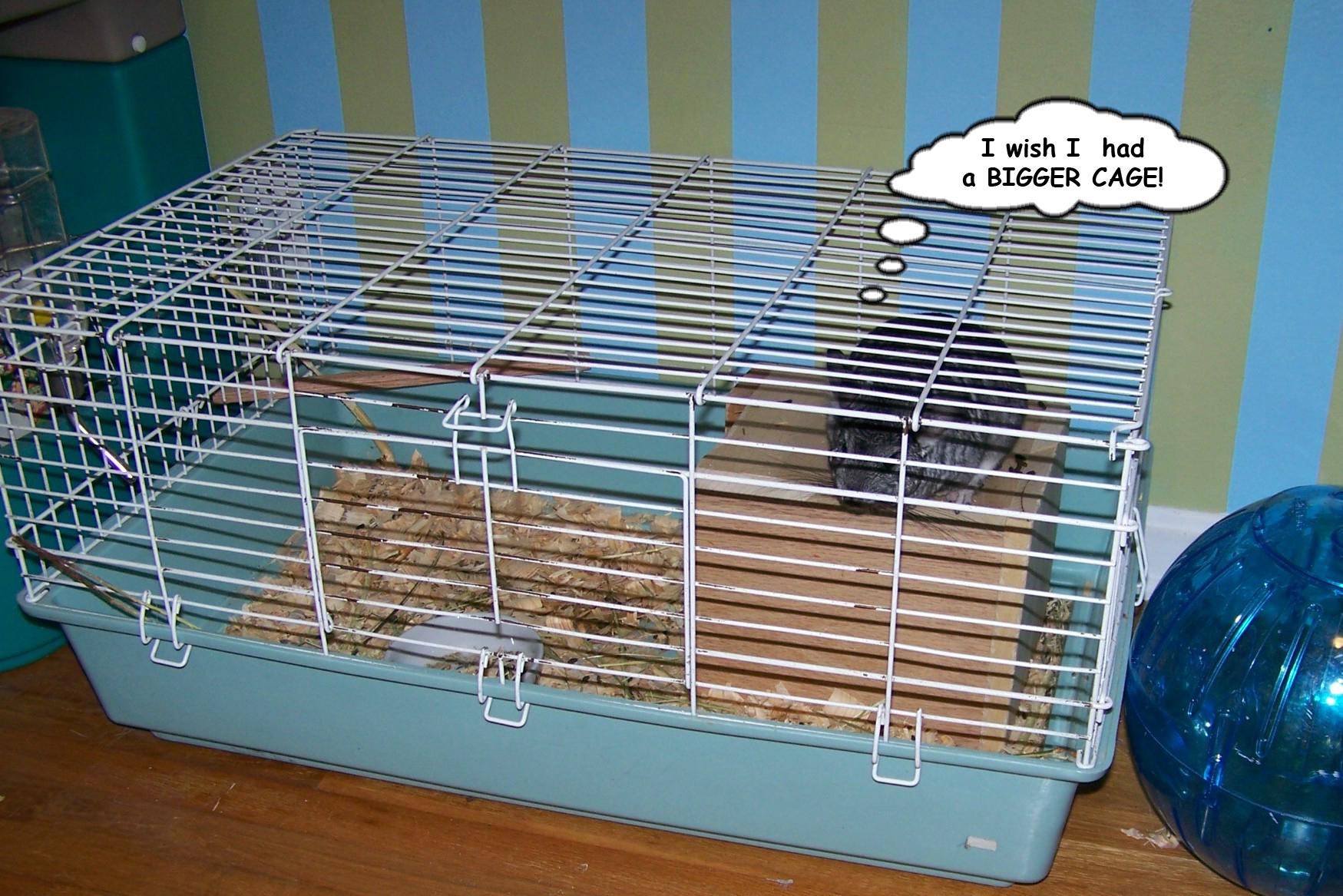 Make your chinchilla's cage bigger.