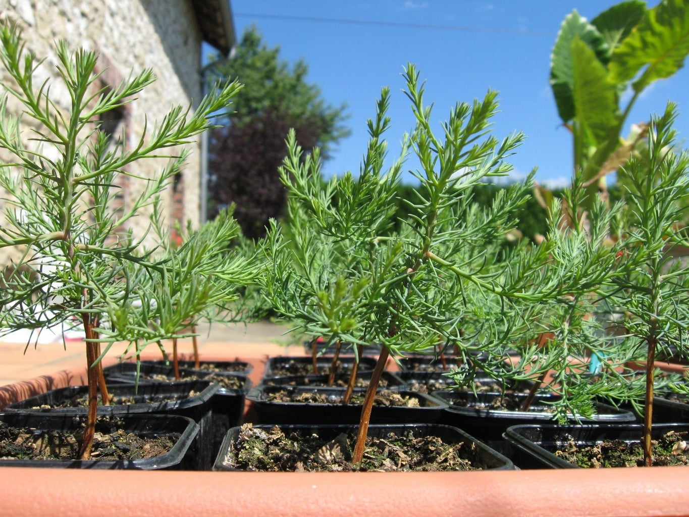 Expose Seedlings to More Light