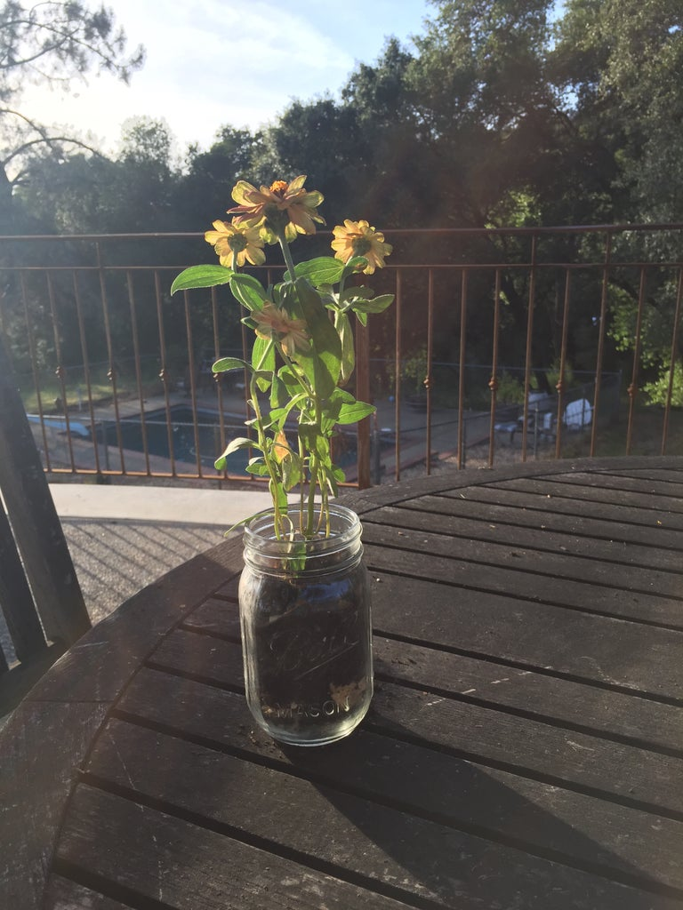 Place Flower and Dirt in Jar.