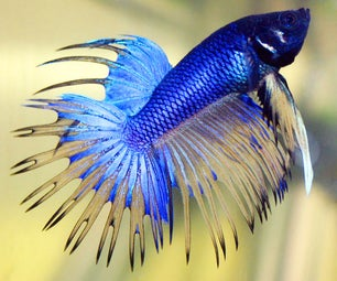 How to Properly House Betta Fish @ Home