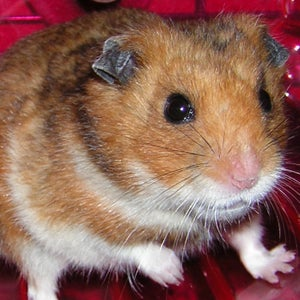 Catch an Escaped Hamster With Surplus Electronics
