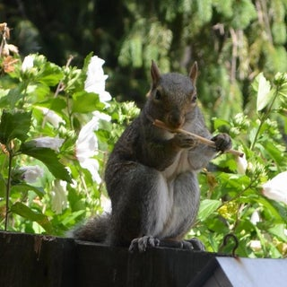squirrel cane (816x1024).jpg