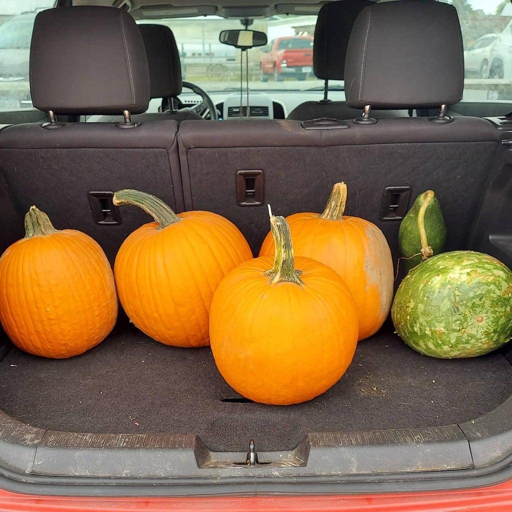 Pumpkins and Patterns