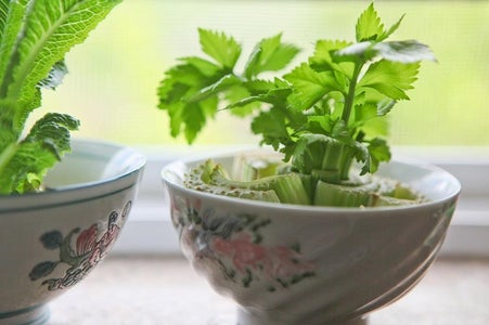 How to Regrow Celery Without Seeds