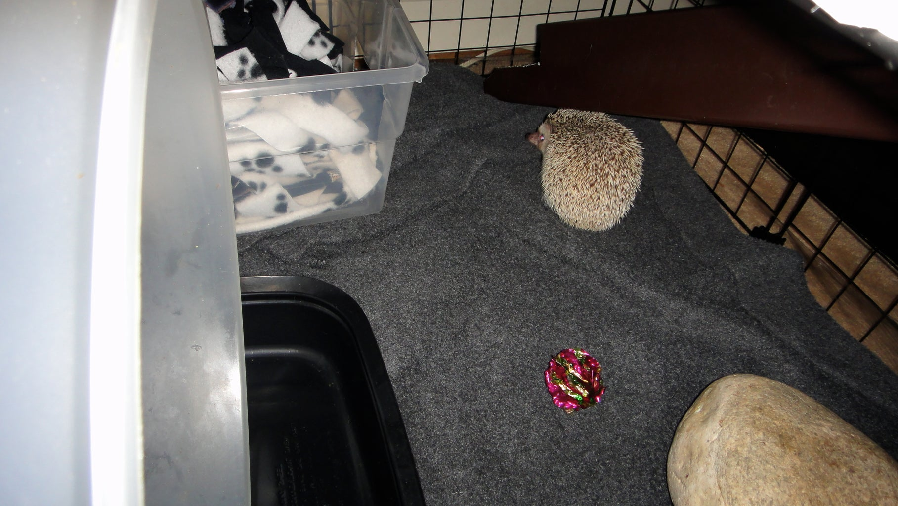 Done!  Hedgie Fun for Everyone!