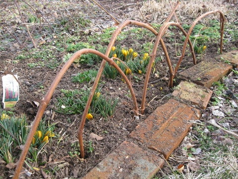 Grapevine Edging for Flowerbeds