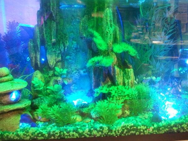 Interactive Aquarium LED Lighting