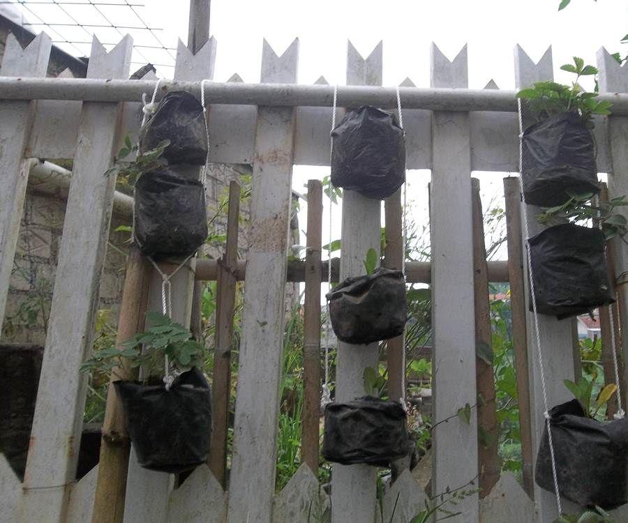 Vertical Garden in 10 Minutes!