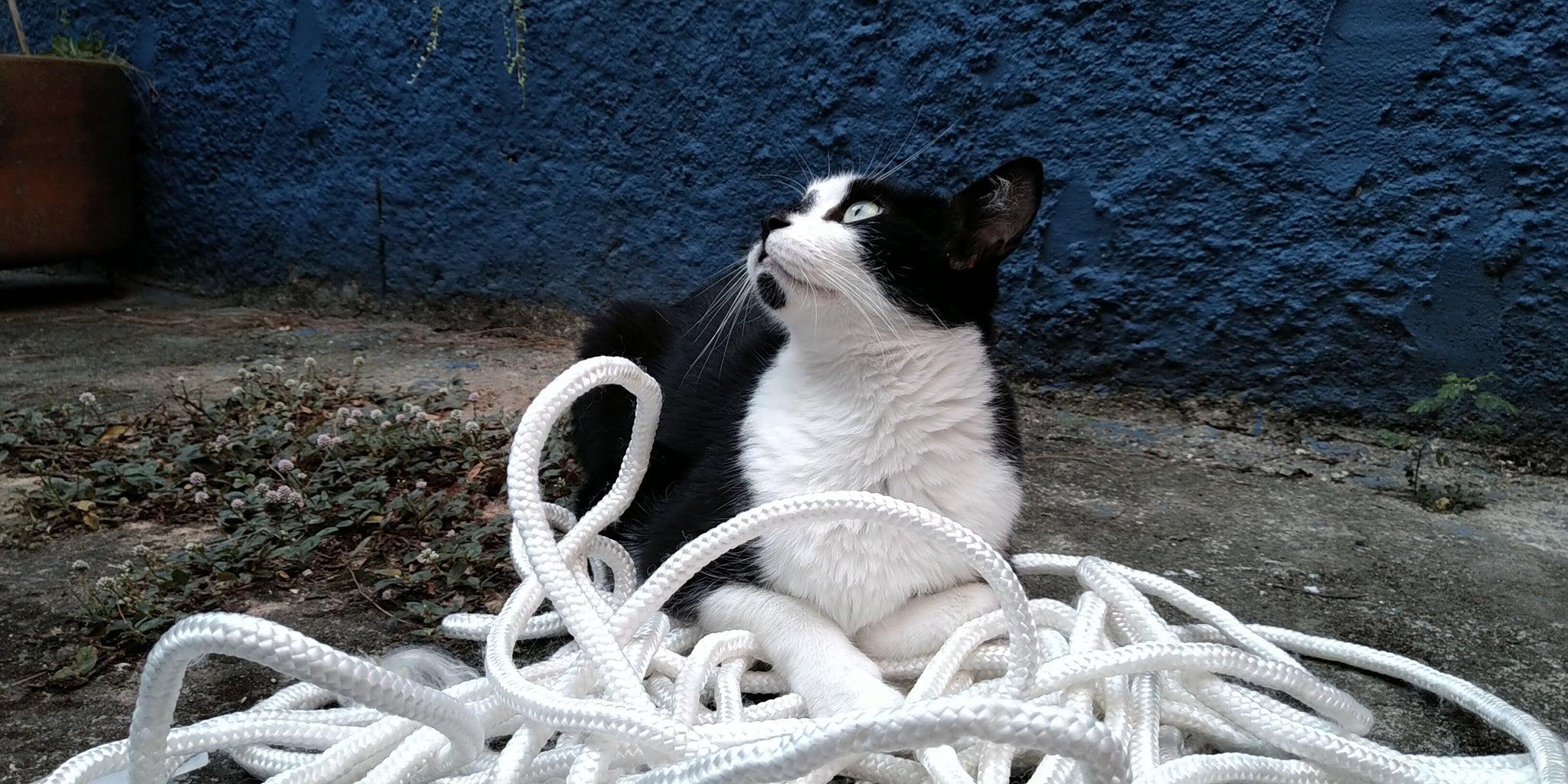 Cat Scratcher - Arranhador Para Gatos
