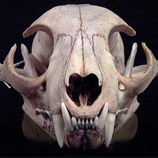 Paper Mache Cow Skull