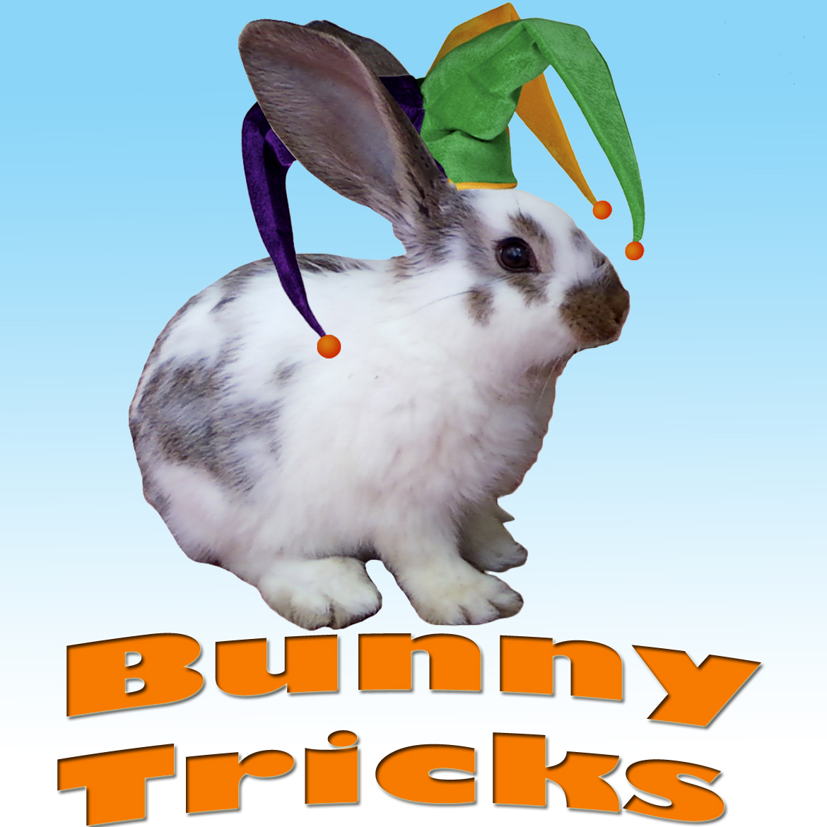 How to teach your bunny simple tricks!