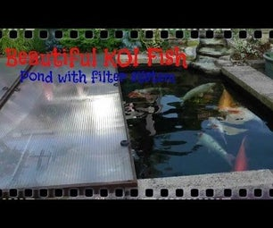 Beautiful KOI Fish With Filter System