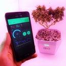 Grow Cannabis the Smart Way