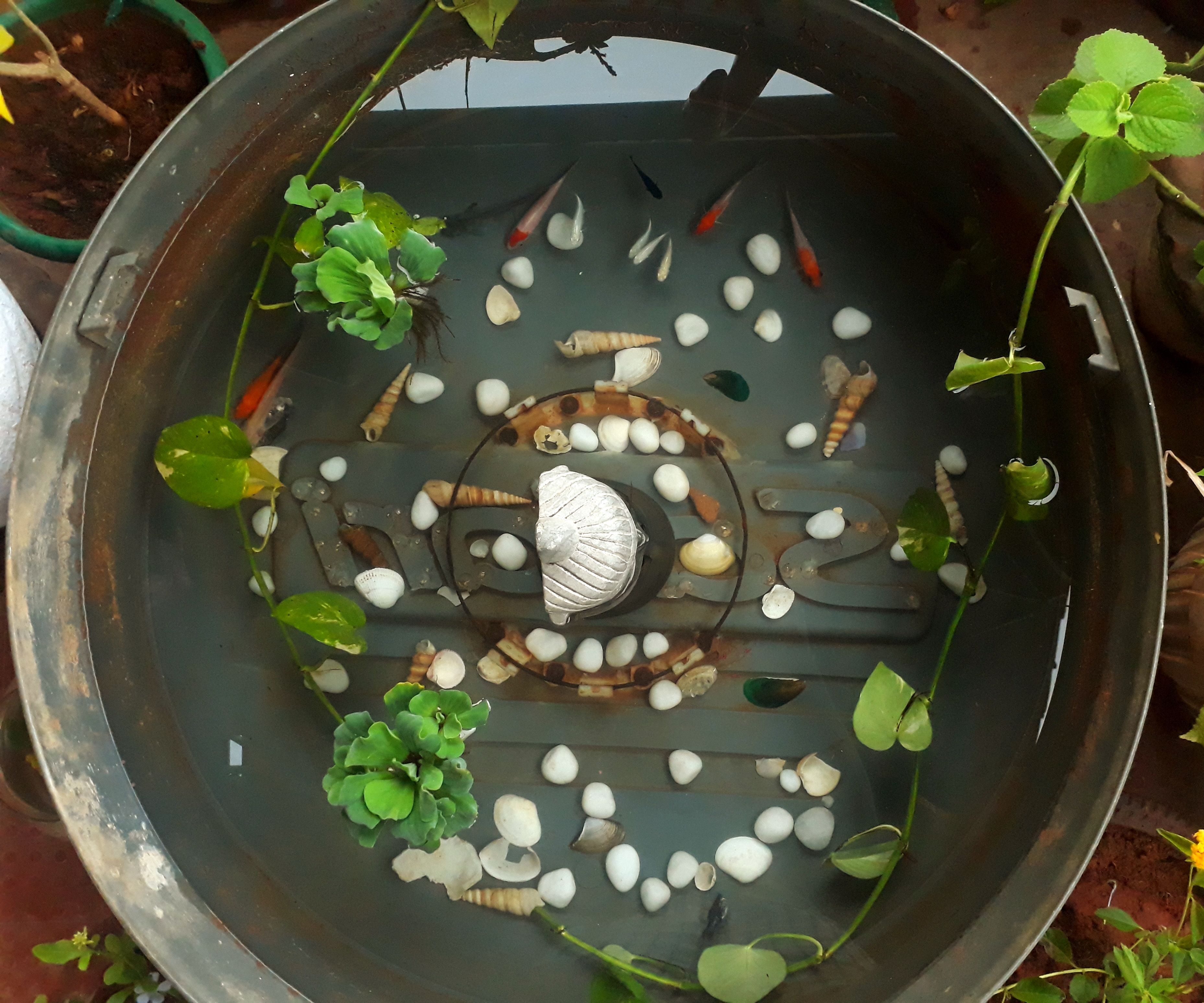 How to Make a Fish Pond at Low Cost