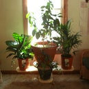 Balanced Plant Stand