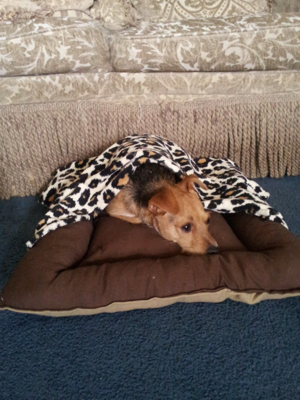 Dog Bed With Removable Blanket