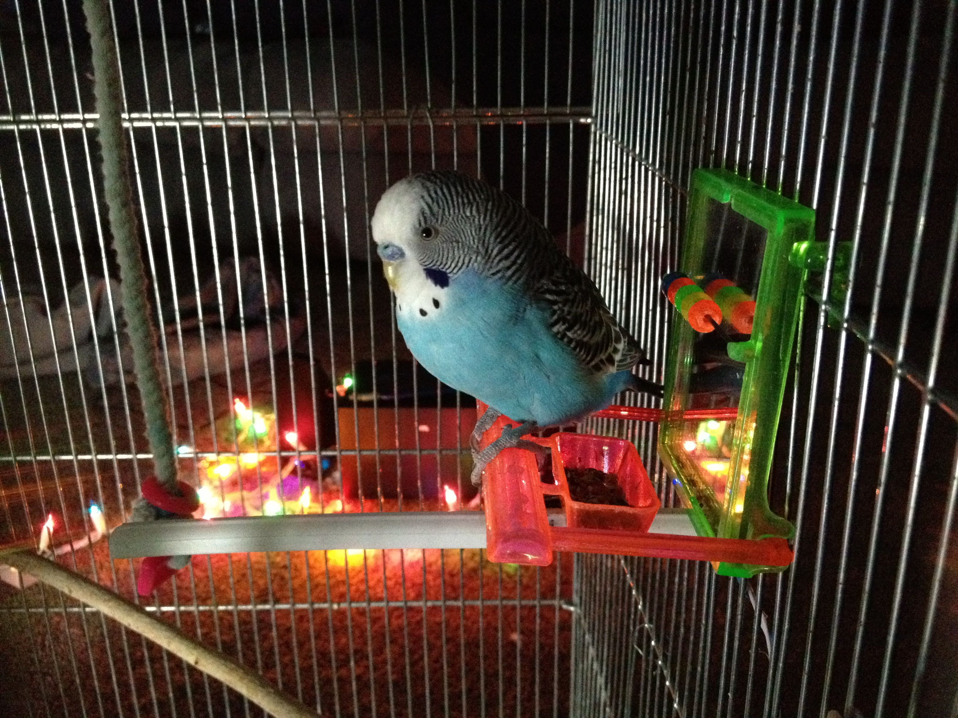 Parakeets controlling lights!