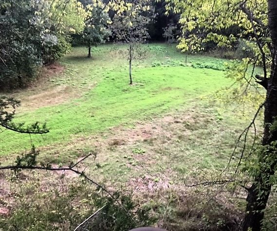 Clover Food Plot for Deer