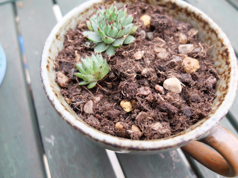 Start Adding the Plants!