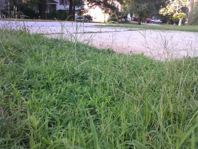 Grass Whip / Weed Cutter
