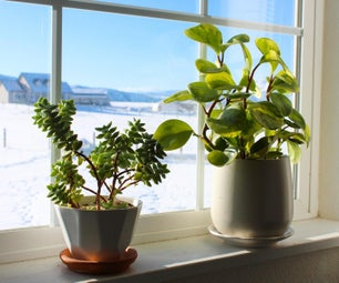 How to Survive Your First Winter With Houseplants