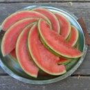 Spiral Watermelon Pattern