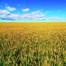 The Agricultural Sensor Array