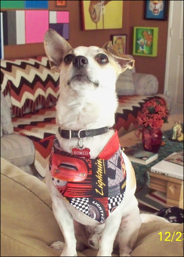 Sewing for Men: Beginner's Project-Dog Bandana