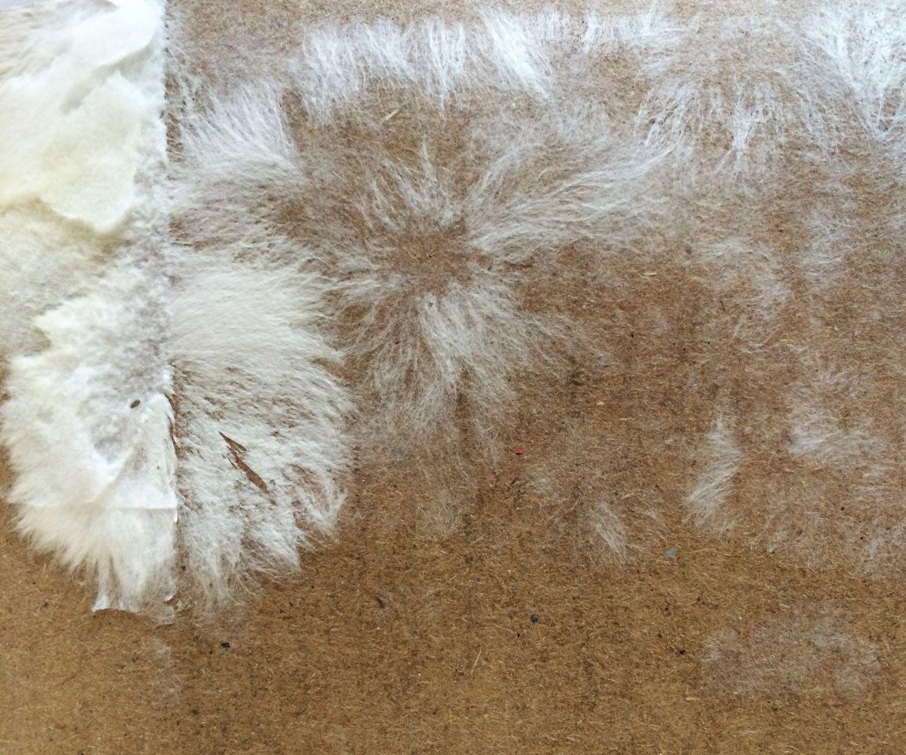 Making Mycelium
