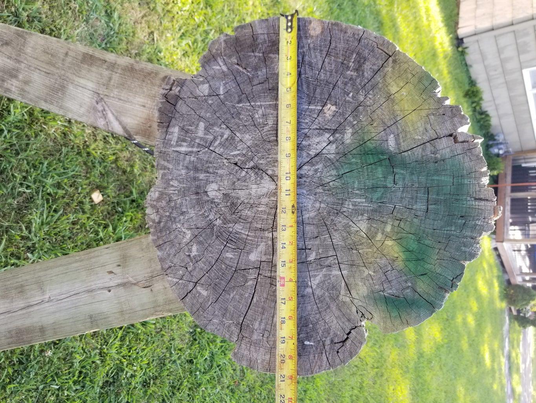 Choosing a Tree Slab