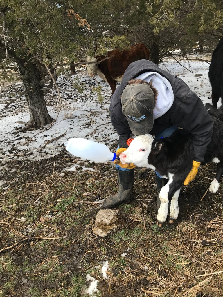 Delivering the Colostrum
