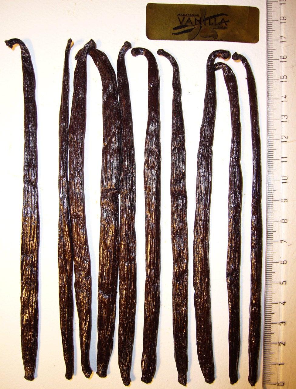 Madagascar Planifolia Comparison