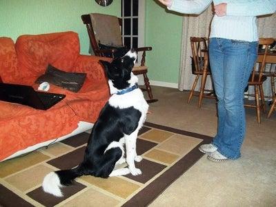 Home-made Dog Training Treats