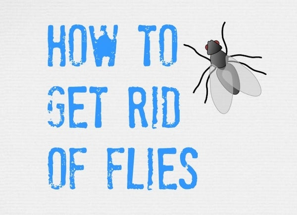 ULTIMATE Tips on How to Get Rid of Flies (inside and Outside)