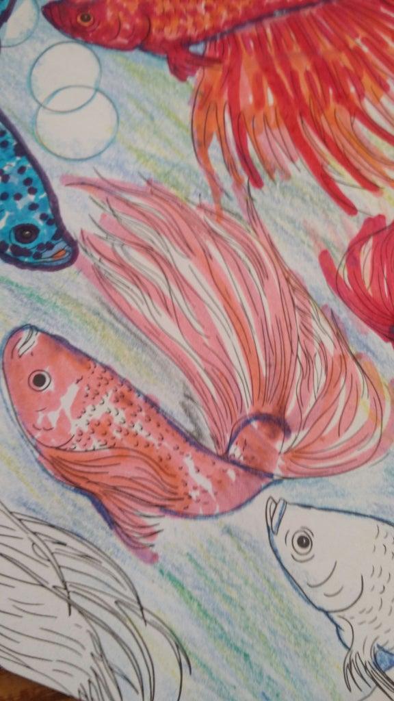 7th Fish