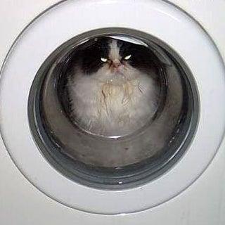 catwasher.jpg