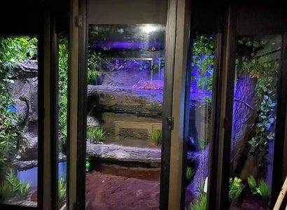 Iguana Enclosure