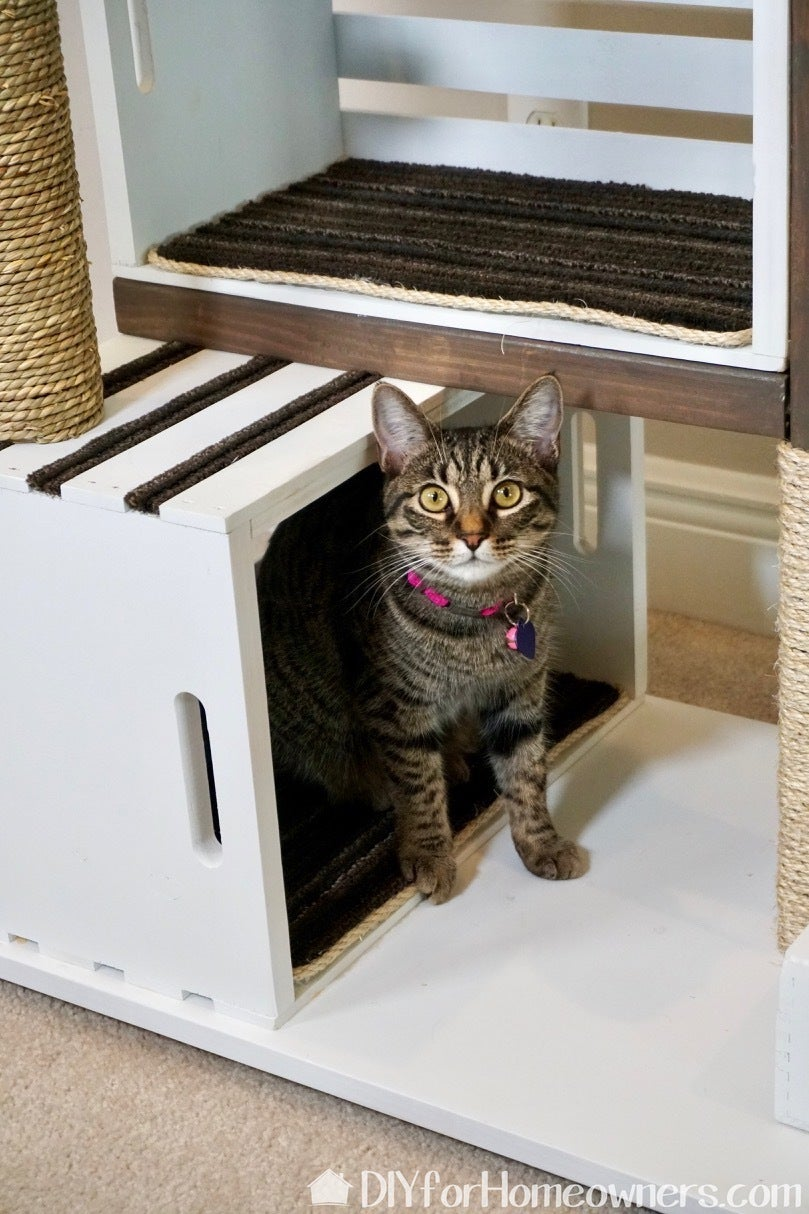 Introduce Your Kitty to His or Her New Home